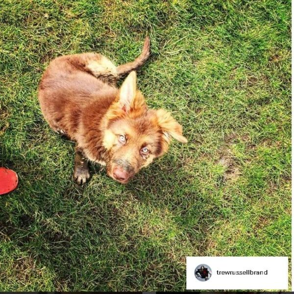 Russell Brand's dog will make full recovery