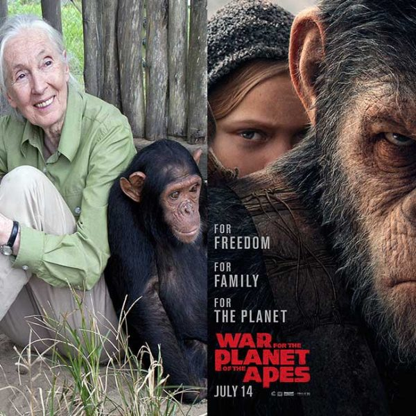 20th Century Fox, Jane Goodall Institute to Aid in Rehabilitation of Chimpanzees in Honor of 'War for the Planet of the Apes'
